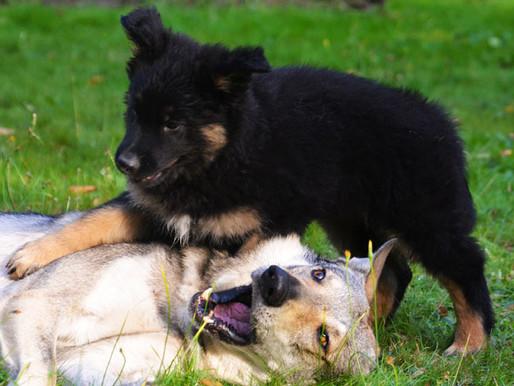 Votre Dog Center de Charleroi sera fermé ce samedi 29/09/18 !