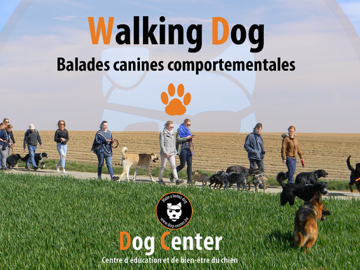 Walking Dog : 3ème édition !