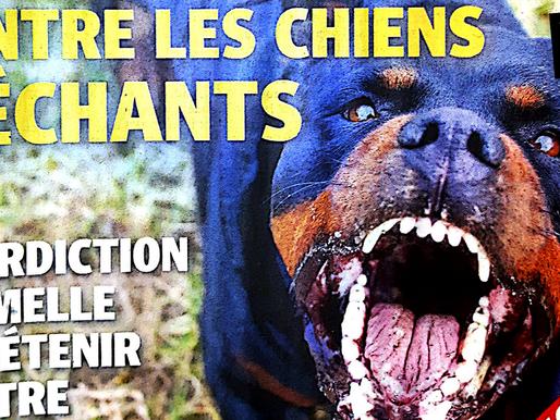 """Décret de loi : chiens """"dangereux"""" ?!?"""