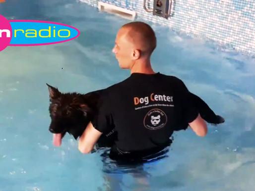 Concours : Fun Radio : une place pour la formation secourisme canin !