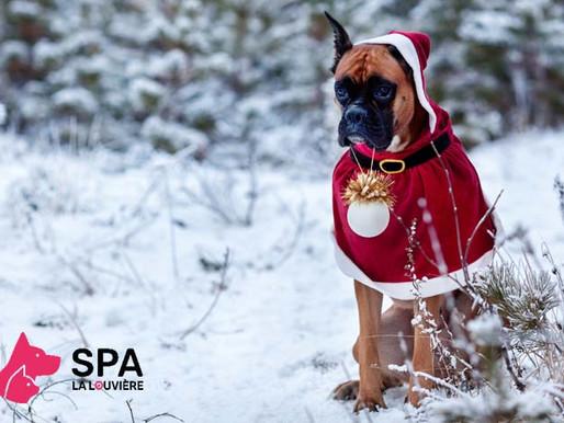 Noël au profit de la SPA de La Louvière !