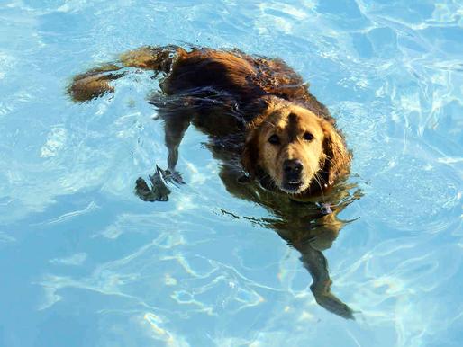 Le Dog Pool ouvre ses portes! Toutes les infos enfin dévoilées!