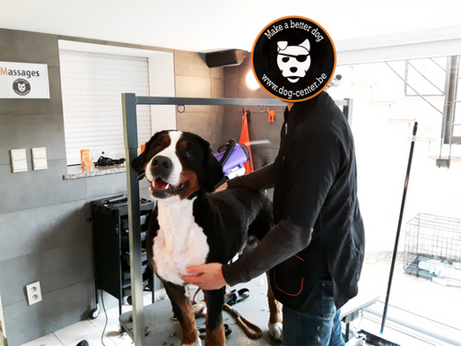 Concours!  Un zèbre chez Dog Center : 6 mois de croquettes à gagner!!!