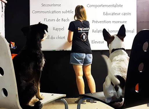 Formation : Devenir éducateur canin / comportementaliste