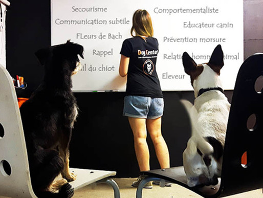 Formation : Devenir éducateur canin / comportementaliste