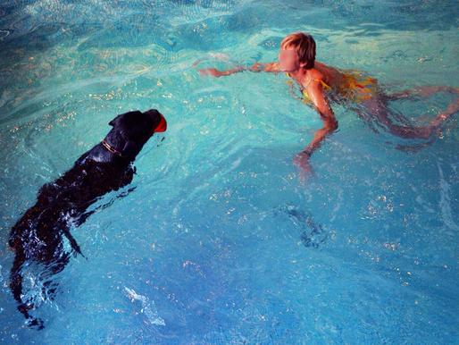 Dog Pool : Baignade entre miss!