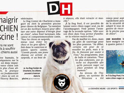 Presse : Le Dog Pool dans votre Dh : Faites maigrir votre chien à la piscine !