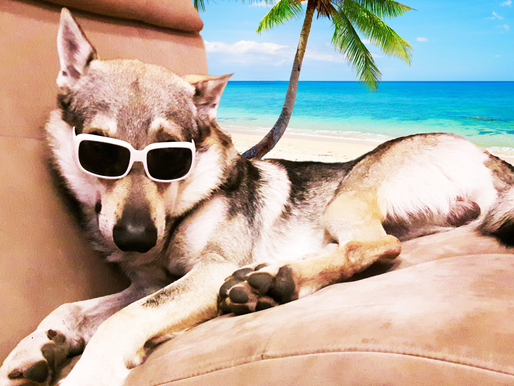Prévention : les vacances avec son chien !