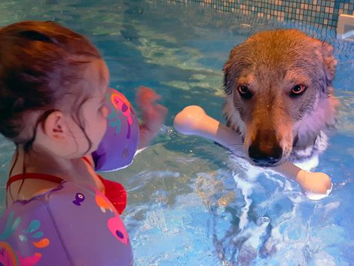 Une petite nage avec votre chien?