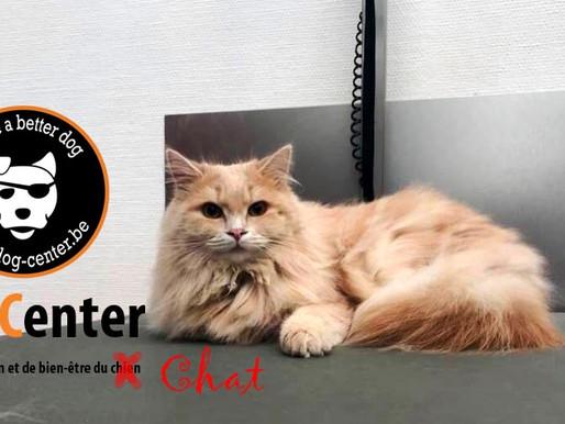 Toilettage félin : un chat au Dog Center !