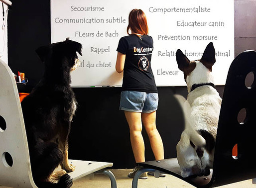 Formation aux métiers du chien : Il reste 2 places !