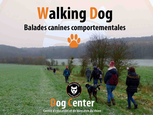 Walking Dog : septième édition :