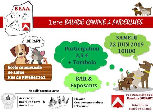 Balade canine : Association Bourl Dog Love