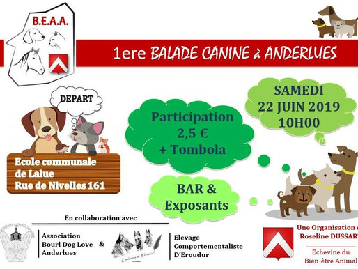 Balade canine : Association Bourl Dog Love