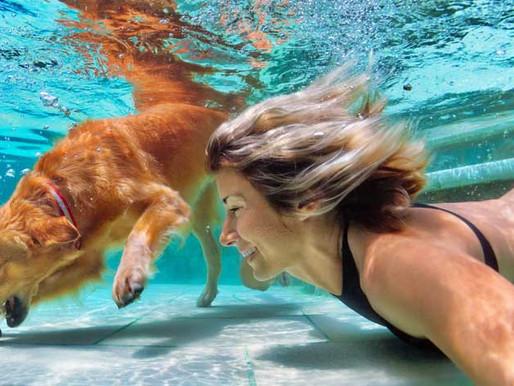 Deux ans du Dog Center : Venez découvrir notre Dog Pool pour 5 euros !