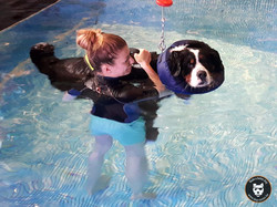 Dog Center Piscine