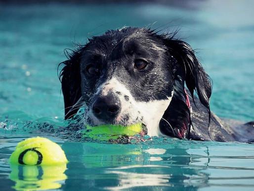 Semaine découverte au Dog Pool : 50% de réduction !
