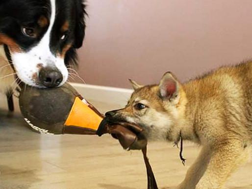 Éducation : Un problème avec votre chien?
