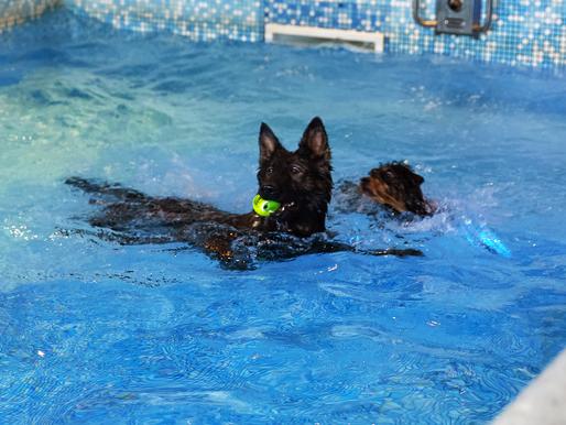 Concours : Remplissage du Dog Pool : résultats !