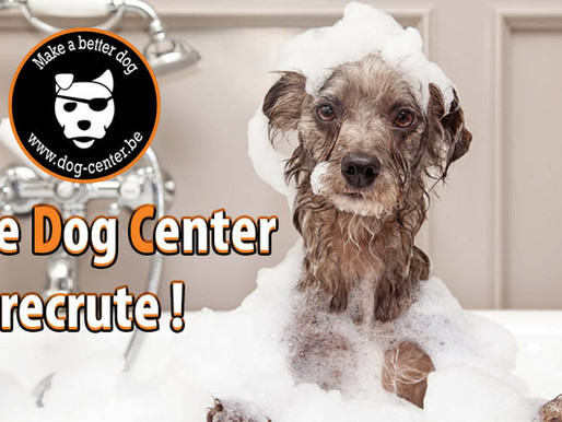 Toilettage : Le Dog Center recrute !