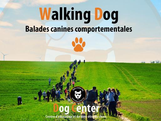 Walking Dog 2ème édition : infos pratiques :