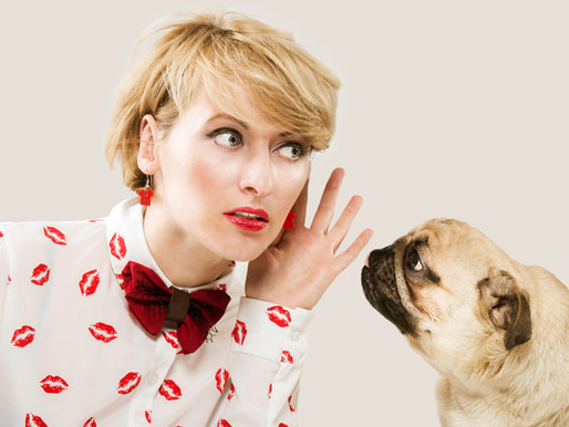 Formation : Communication subtile avec les animaux