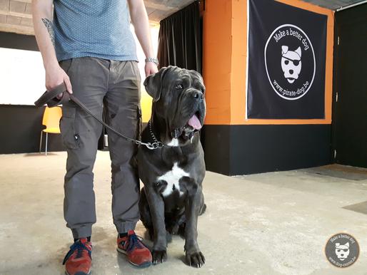 Éducation - obéissance : Un géant au Dog Center