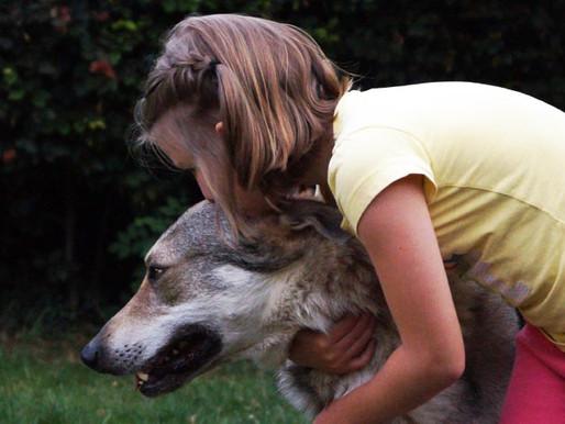 Un problème avec votre chien?