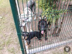Dog Center Pension