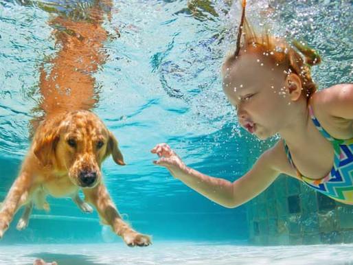 Initiation à la piscine pour vos chiots !