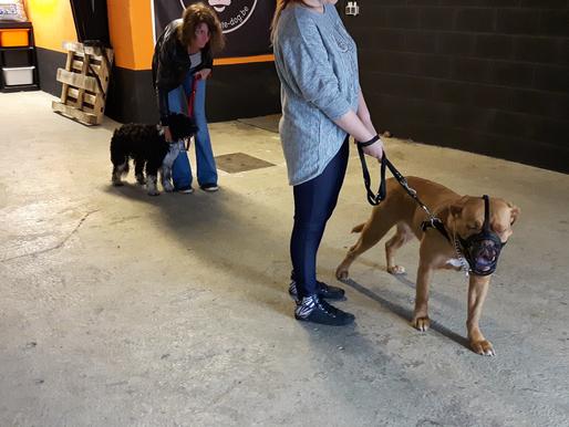 Cours collectifs : de plus en plus de chiens!