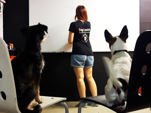 Formation aux métiers du chien : et si c'était vous ?