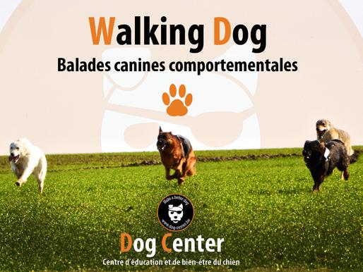 Walking Dog première édition !