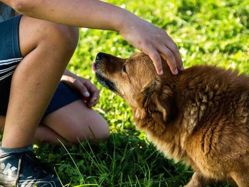 Éducation et comportement : un bon chien de famille !