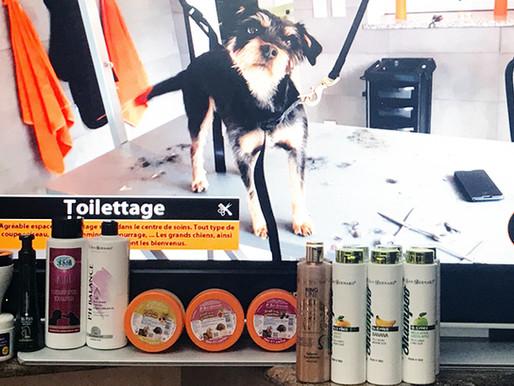 Toilettage : Protocoles IV San Bernard !