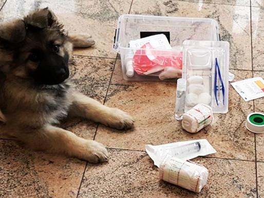 Cours collectifs chiots : initiation au secourisme canin