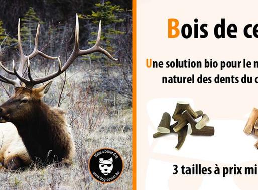 Le bois de cerf : une solution naturelle pour nos chiens !