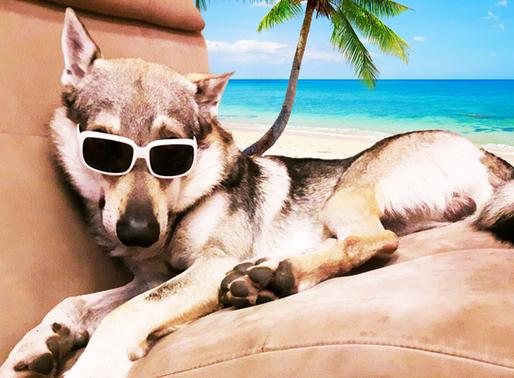 Prévention : bien préparer son chien pour les vacances