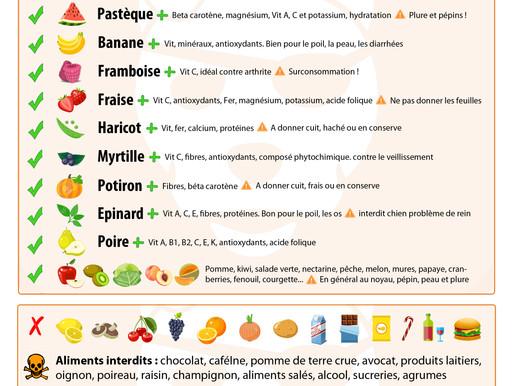 Conseils : Quels fruits et légumes pour votre chien ?