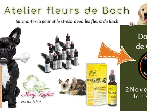 Fleurs de Bach : Atelier à Charleroi