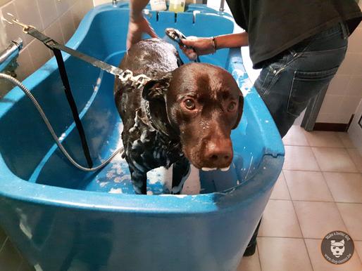 Un bon bain s'il vous plait!
