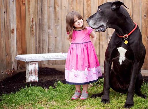 Comportement : vous rencontrez des problèmes avec votre chien?