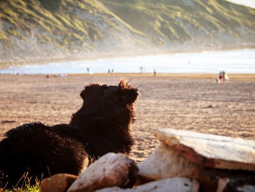 Vacances canines : le paradis !
