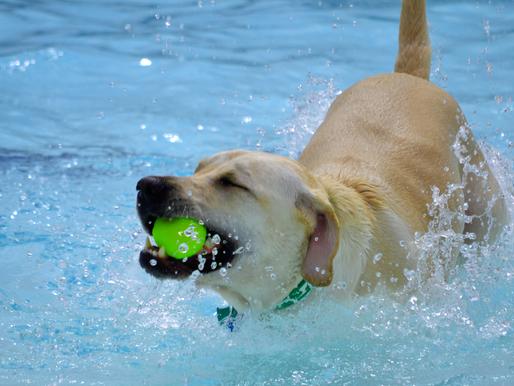 Piscine pour chiens : Concours : Résultats!