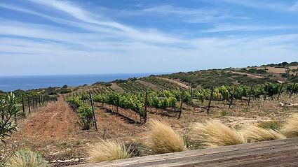 vineyard 2021.jpg