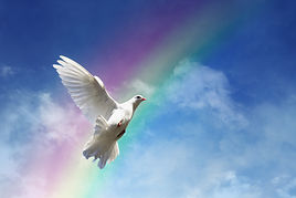 White dove against clouds and rainbow co