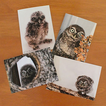 Woody Little Owl Cards
