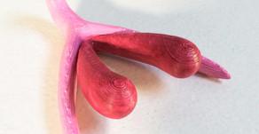 10 דברים שכדאי לדעת על הדגדגן?