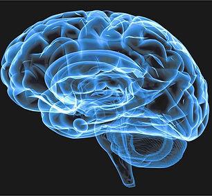 blue-brain_2x.jpg