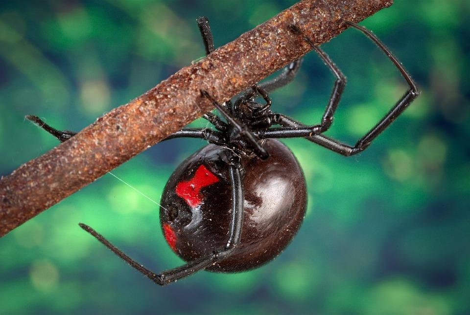 Spider Extermination & Control